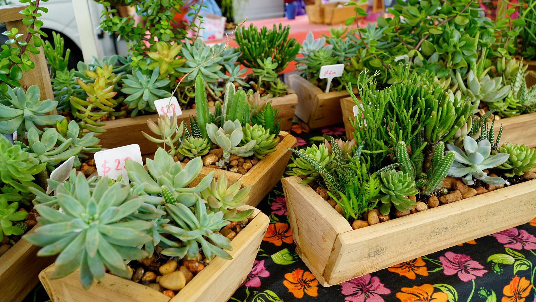 succulents at Brisbane Sunday markets