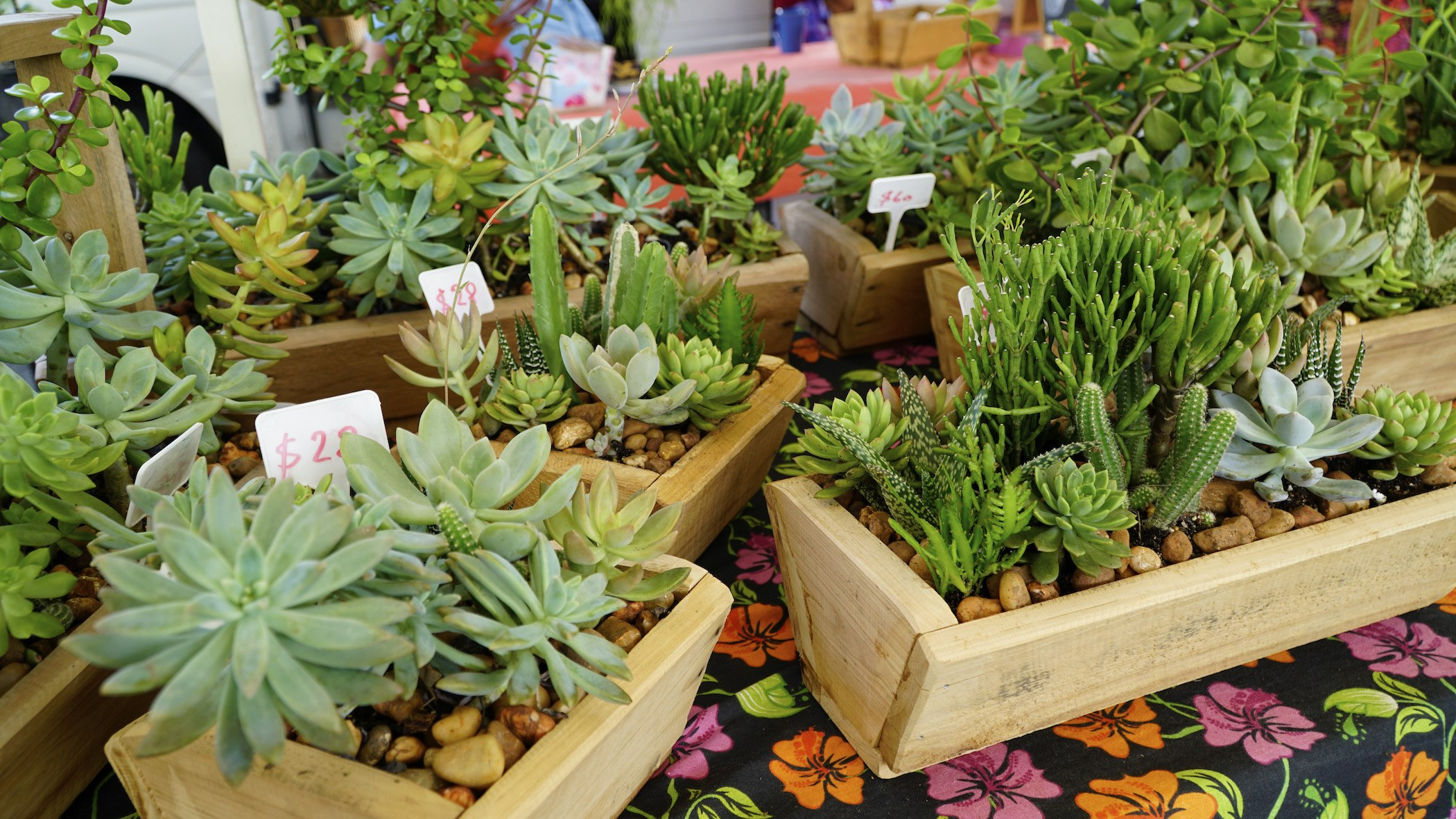 Christmas Succulent Gift Ideas.Christmas Gift Ideas For 2018 Brisbane Marketplace